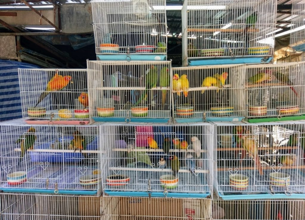 pet birds in cages piled upon one another